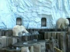 urs polar zoo