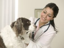 Lista cabinete veterinare din Bucuresti