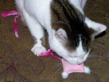 Cum sa confectionezi singur jucarii pentru pisica