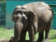 elefantul gaya
