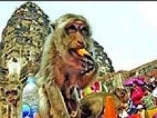 festivalul maimutelor