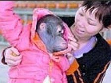 haine de iarna pt maimute