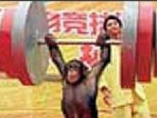 olimpiada animalelor