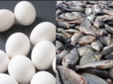 oua peste