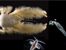 specii noi